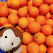 《2K》丸くて可愛い*赤レモン 2キロ 30個程度 果物(レモン) 通販