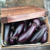 訳あり規格外🍆たっぷり召し上がれ🍆お多福野菜🍆千両茄子 10〜15本程 1.5〜2k 野菜(茄子) 通販