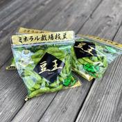 ミネラル栽培ブランド枝豆[豆王] 260g×6袋 群馬県 通販