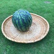 増田農園 増田農園のスイカ🍉 一玉(6キロ以上)