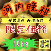【えひめ県産】訳あり《 河内晩柑 》 15kg(箱込み) キーワード: 訳あり 通販