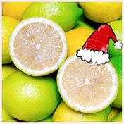 《訳あり2K》黄と緑まぜまぜレモン☆増量中+おまけ 2キロ 20個程度 果物(レモン) 通販