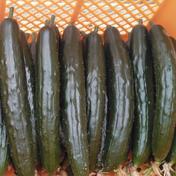 【和想の】ワソキュー【きゅうり】 60サイズ箱 総重量2kg以内 (約15本前後) 果物や野菜などのお取り寄せ宅配食材通販産地直送アウル