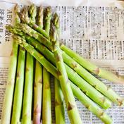 35g以上!アスパラガス2L1キロ 2L1キロ 野菜(アスパラガス) 通販