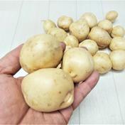 ホックり美味しい!掘りたて馬鈴薯 男爵 (*^^*) 馬鈴薯 【男爵芋】約2kg(箱重量込み) 野菜(じゃがいも) 通販