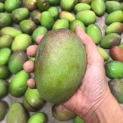 グリーンマンゴー(青マンゴー) 1.8㎏ 果物(マンゴー) 通販