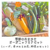 【夏ギフト】季節のおまかせオーガニックSPセット(ハーブ、食べれるお花、野菜のセット) 季節の野菜7〜8品目とハーブ、エディブルフラワーの詰め合わせ キーワード: 夏ギフト 通販