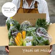 有限会社ミモザファーム 『自然栽培』旬の野菜セットM/80サイズ 旬の野菜8-10種類詰め合わせ/野菜がお好きな方2ー3名が3ー4日で食べ切れる量
