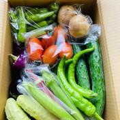 新庄朝取り野菜セット 2kg前後 果物や野菜などのお取り寄せ宅配食材通販産地直送アウル