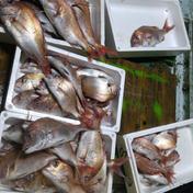 【訳あり】鮮魚BOX3〜5キロ。送料込み 3キロ以上 魚介類 通販