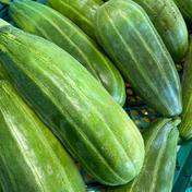 はぐらうり 8キロ 8キロ 果物や野菜などのお取り寄せ宅配食材通販産地直送アウル