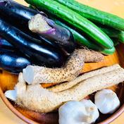 訳あり自然薯と野菜4品とにんにくL20個セット! 自然薯 訳あり品 700g にんにくM3個 ナス 5〜6本 きゅうり 5〜6本 お任せ採れたて野菜 1品 にんにくL20個 自然薯のくわはら