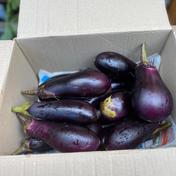 鈴木清友農園 秋なすを! 1.5kg 野菜(茄子) 通販