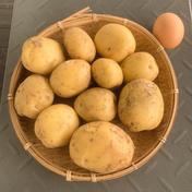 ジャガイモ(キタアカリ)2kg 2kg 果物や野菜などのお取り寄せ宅配食材通販産地直送アウル