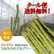 出荷当日の今朝採れ 「1kgさぬきのめざめ プレミアム 30cm 3L以上」グリーンアスパラ 1kg 野菜(アスパラガス) 通販