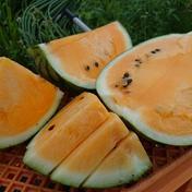 オレンジスイカ1個(6kg~8kg) 6kg~8kg 果物や野菜などのお取り寄せ宅配食材通販産地直送アウル
