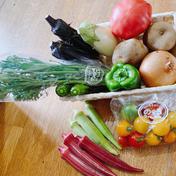 のぐちファーム のぐちファーム安曇野産お試し野菜セット3品