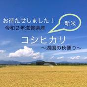 ちょっとした贈り物にも!令和2年滋賀県産減農薬栽培コシヒカリ白米約10kg新箱 約10kg 滋賀県 通販
