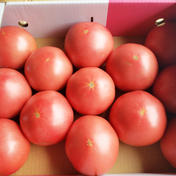 山七農園の王様トマトL 3kg 果物や野菜などのお取り寄せ宅配食材通販産地直送アウル