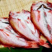 のどぐろ一夜干3枚 3枚(1枚約250g) 魚介類 通販