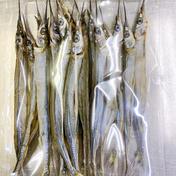 さより丸干し 1P(80g)×6 魚介類(その他魚介の加工品) 通販