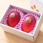 たなか果樹園 華マンゴー 4L2玉箱 510g以上2玉