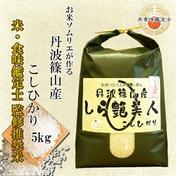 丹波篠山 細見農園 【新米R2年産】お米ソムリエが作る 丹波篠山産こしひかり 5kg 白米5kg