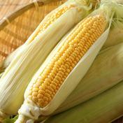 通常の20%まで減農薬 とうもろこしLサイズ5本 Lサイズ5本 野菜(とうもろこし) 通販