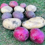 5キロ 色々な種類のジャガイモ 食べ比べセット seikoファーム