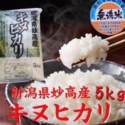 キヌヒカリ  5kg  無洗米  令和二年産  (送料込み) 5kg×1 新潟県 通販