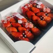 群馬オリジナル【やよいひめ】2パック入り 280g×2パック 果物 通販