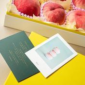 【クール】【6玉】【最高級】忘れられない夏に、桃を添えて 6玉 HOPE園 山梨のもも農家