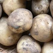上野原ゆうきの輪 別名(クリジャガイモ)キタアカリ 卵サイズ5㎏ 5㎏