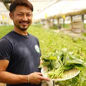 株式会社Kawau Farms ☆☆栄養満点☆女性におすすめ☆くうしん菜☆☆ 1kg