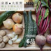 京都⚫︎旬のお野菜詰め合わせ6品 京都府 通販