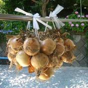淡路島 里農園 【吊るして長期保存】つる付き淡路島たまねぎ(10キロ) 10kg