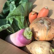 頑張るあなたに💪野菜で元気いっぱい食べきり野菜セット🍀 2kg 大樹地農園