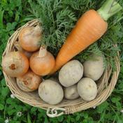 【2020最優秀賞】自然栽培♪カレーや煮物の定番3兄弟セット(5kg) 5kg以内 果物や野菜などのお取り寄せ宅配食材通販産地直送アウル