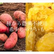 農家の中でも『幻』のじゃがいも! 本当に美味しいじゃがいも!【限定販売】去年も即完売!うまい 野菜!3.5キロ!自然栽培!農薬不使用!無農薬、無肥料、自然農法 固定種 3.5kg 広島県 通販