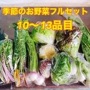 【冷蔵タイプ】厳選!のぐちファーム季節の野菜セット のぐちファーム