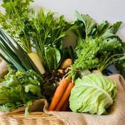 【父の日】 京都から旬の野菜を詰め合わせ10品目野菜セット 京都府 通販