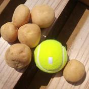 くさか農園 【訳あり】茨城県産 小粒じゃがいも(トヨシロ)箱込み4kg+おまけ1kg 箱込み4kg+おまけで1kg