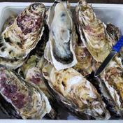噴火湾産牡蠣Mサイズ(160g~200g/個) 15個 魚介類(牡蠣) 通販