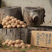 やさしい風の農薬不使用自然栽培じゃがいも 10kg 野菜(じゃがいも) 通販