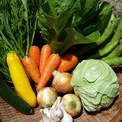 そらみどふぁーむ 九州発、無農薬・無化学肥料栽培!旬の野菜8品詰め合わせ! 旬の野菜8品
