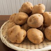 ホックホク! 北海道ニセコ町産じゃがいも(男爵)  10kg 約10kg 野菜(じゃがいも) 通販