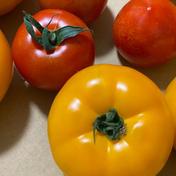 三浦産!トマトセット 2kg 果物や野菜などのお取り寄せ宅配食材通販産地直送アウル