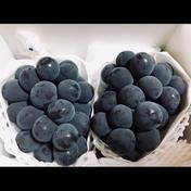 【夏ギフト】朝採り極甘!濃厚ピオーネ1.1kg(2房)(7月中旬発送熨斗対応可) ピオーネ1kg(2房) 果物 通販