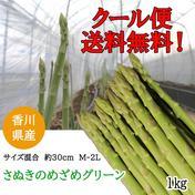 出荷当日の今朝採れ 「1kgさぬきのめざめ30cm M~2L ミックス」グリーンアスパラ 1kg 野菜(アスパラガス) 通販