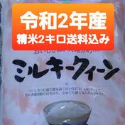 特別栽培米ミルキークィーン精白米2キロ ミルキークィーン精白米2キロ 三重県 通販